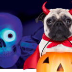 Puppy Howl O'Ween